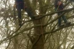 Tree Work 11