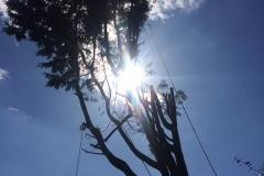 Tree Work 12