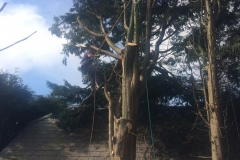 Tree Work 13