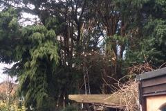 Tree Work 14