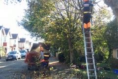 Tree Work 15