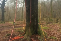 Tree Work 17