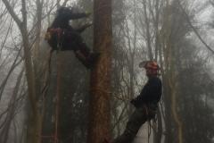 Tree Work 8