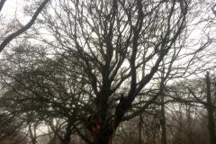 Tree Work 9