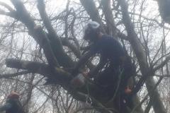 Tree work 5
