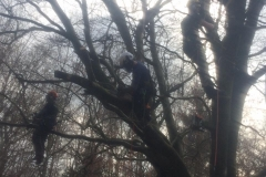 Tree work 6