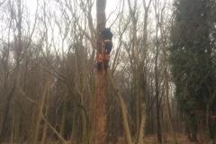 Tree work 7