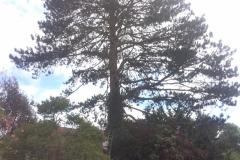 tree work 4
